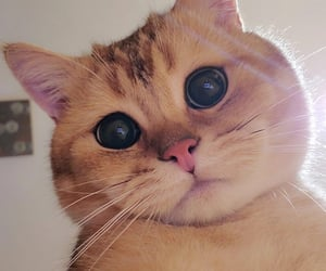 adorable, cat, and eyes image