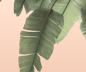 art, background, and banana leaf image