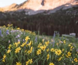 utah and wildflowers image