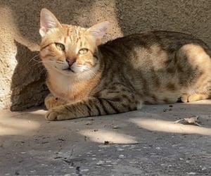 animals, cat, and sun image