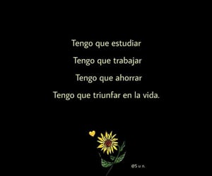 frases, sunflowers, and motivacion image