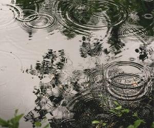 nature, photography, and rain image