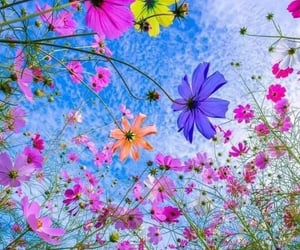 flowers, flores, and nature image