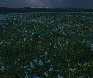 flowers, wallpaper, and night image