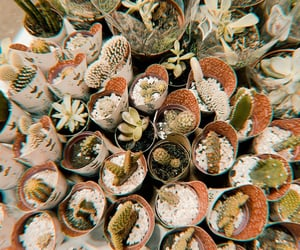 photography and cactos image