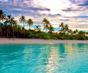 Island, summer, and palms trees image