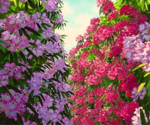 flowers, anime, and ghibli image
