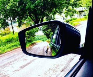 driving, neighborhood, and woods image