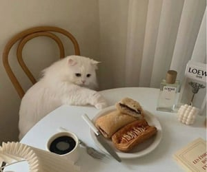 cat, food, and cute image