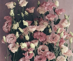 aesthetic, flowers, and pink gold image