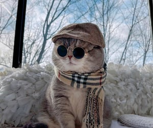 cat and fashion image