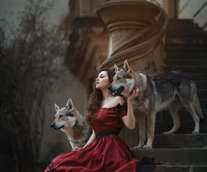 wolf, enchanted, and fantasy image