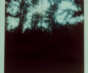 blue, haze, and woods image