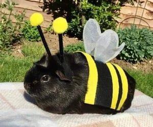costume, fluffy, and cute image