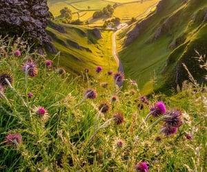 flowers, horizon, and grass image