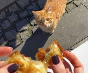 cat, food, and pet image