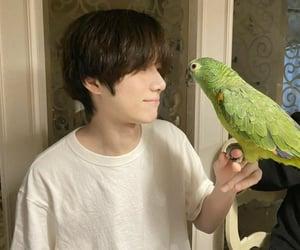 bird, pet, and true love image