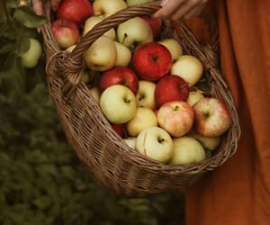 apple, apples, and August image