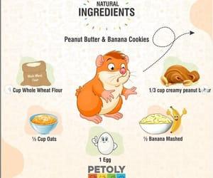small animal supplies, small animal food, and hamster food online image
