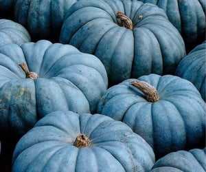 blue, pumpkin, and autumn image