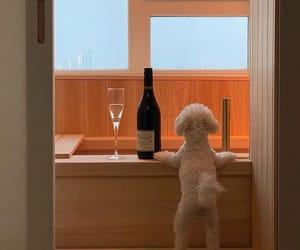 dog, wait, and love image