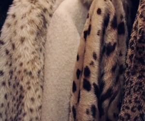 animal print, beautiful, and clothes image