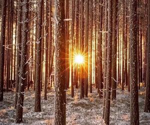 belleza, luz, and naturaleza image