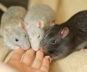 adorable, fluffy, and mice image