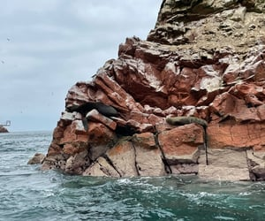 sea wolf, perú, and paracas image