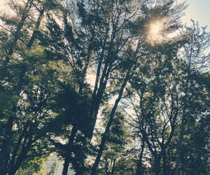 beautiful, nature, and good morning image