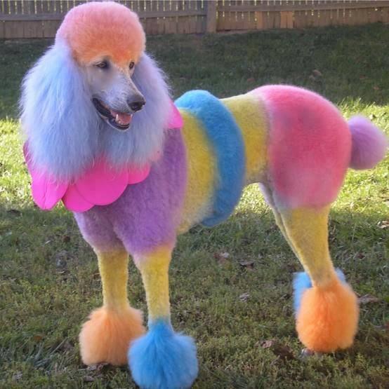 funny, funny dog, and funny animal image