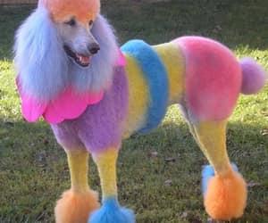 funny, funny animal, and funny dog image
