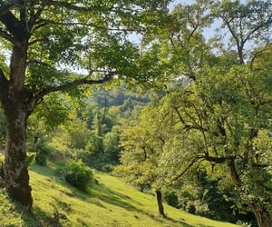 countryside, green, and leaves image