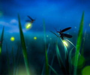 fireflies, photography, and summers night image