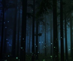 photography, firefly, and summers night image