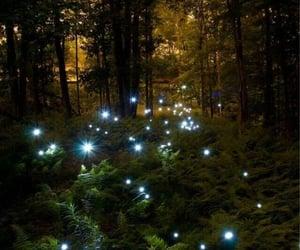 fireflies, summer night, and glow image