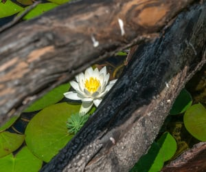 branch, flowers, and pond image
