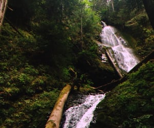 forest, plants, and waterfall image
