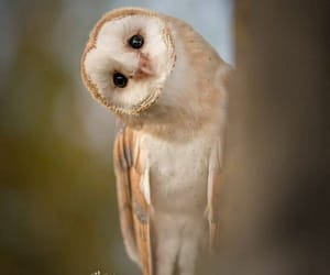 bird, owl, and photography image
