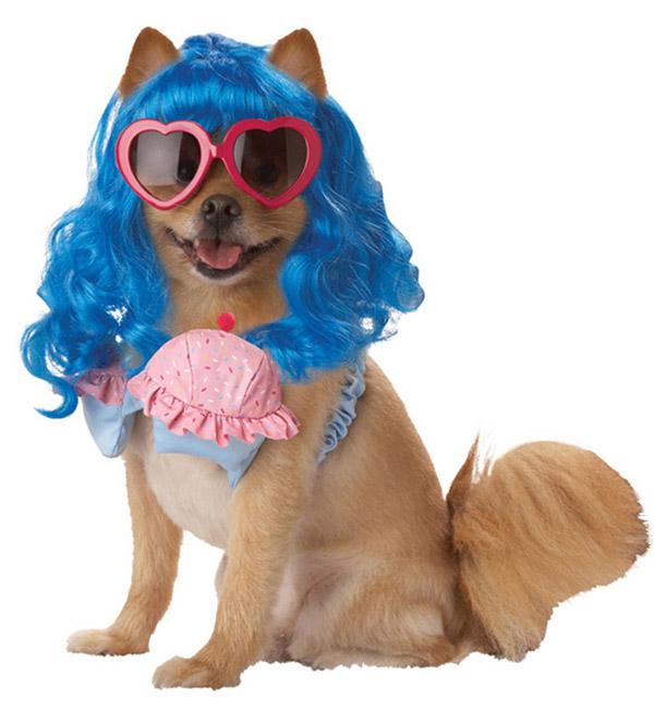 funny, funny dog, and funny dog costume image