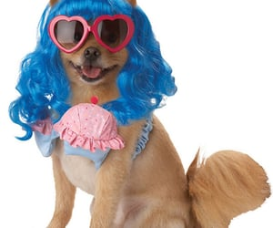 funny, funny dog costume, and funny dog image