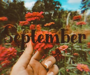 flowers, photography, and September image