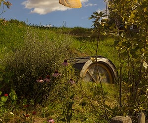 farm, garden, and green image