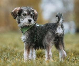 animals, pets, and puppy image