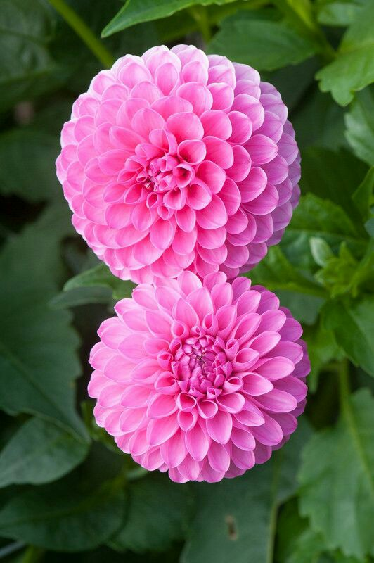 flowers beauty, naturephotography, and beauty of nature image