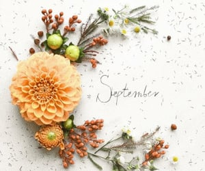 autumn, flowers, and September image
