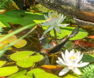 branch, fish, and flowers image