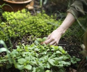 farm, herbs, and hobbiton image