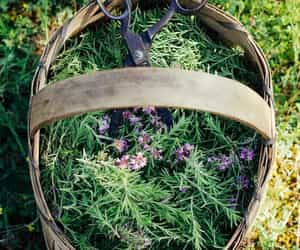 fairy tale, garden, and the shire image