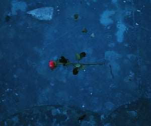 blu, flower, and ice image